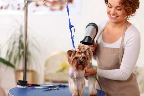 Where-To-Begin-Your-Career-As-A-Pet-Groomer-2